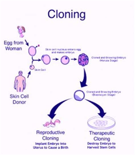 human cloning benefits essay pros and cons of human cloning   sample essays